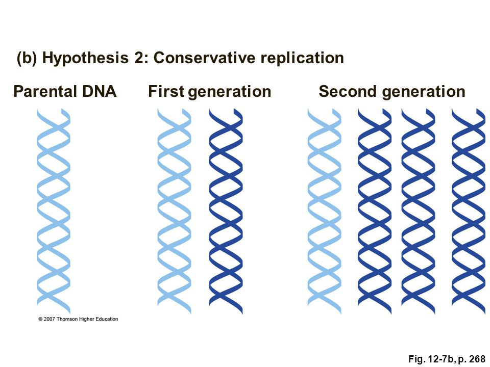 (b) Hypothesis 2: Conservative replication