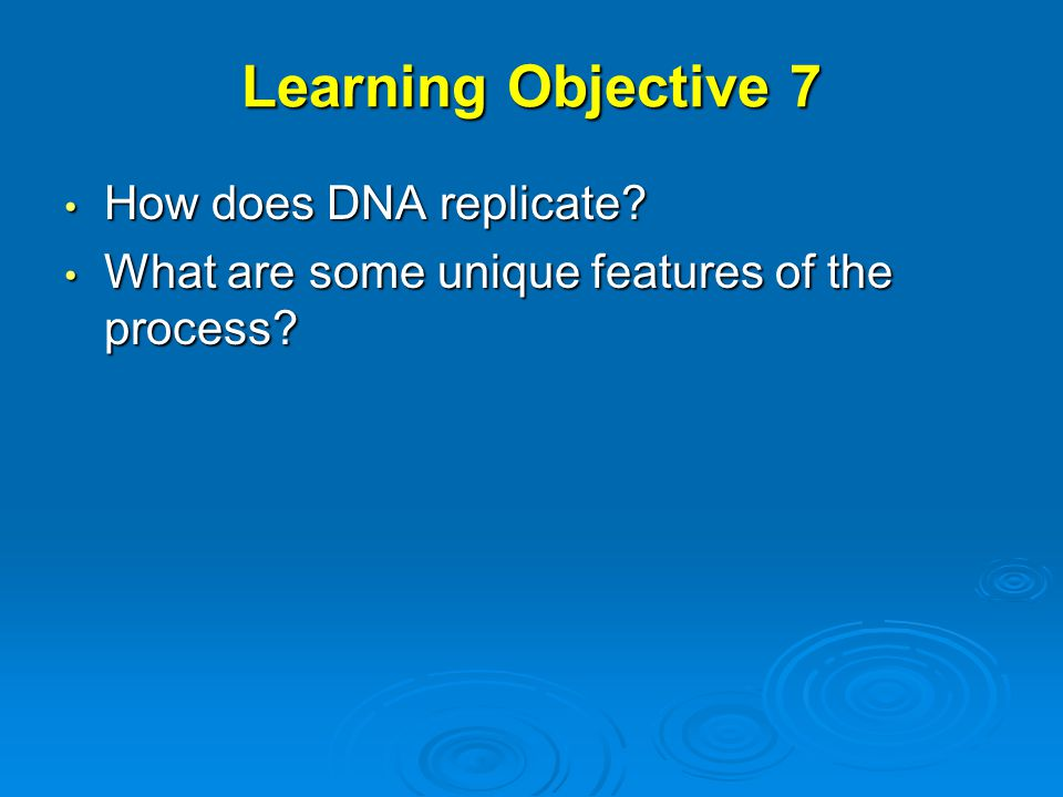 Learning Objective 7 How does DNA replicate