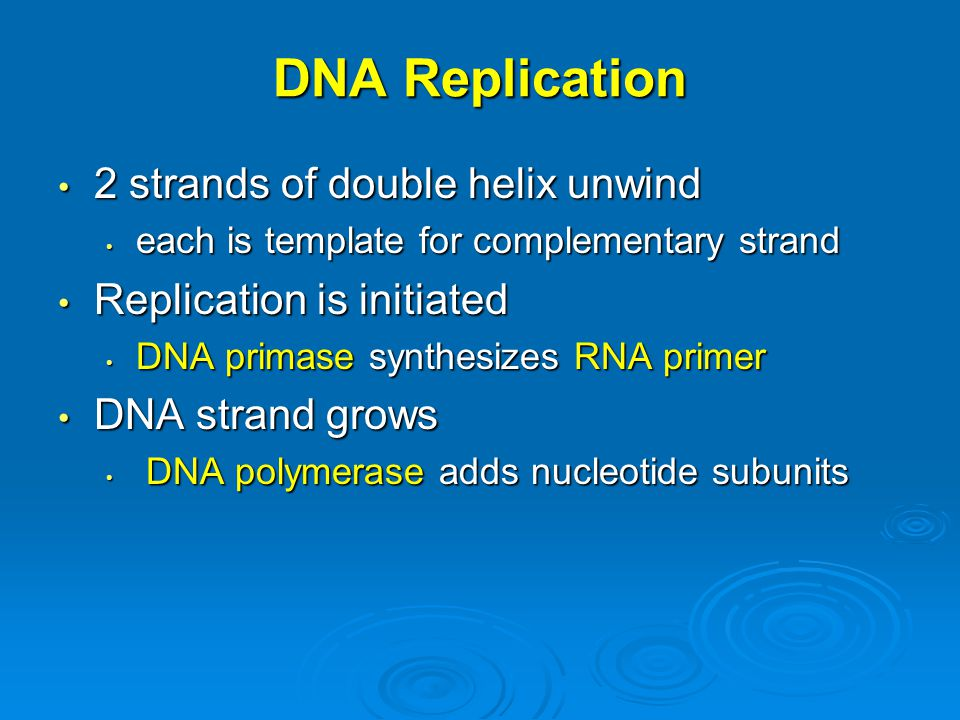 DNA Replication 2 strands of double helix unwind