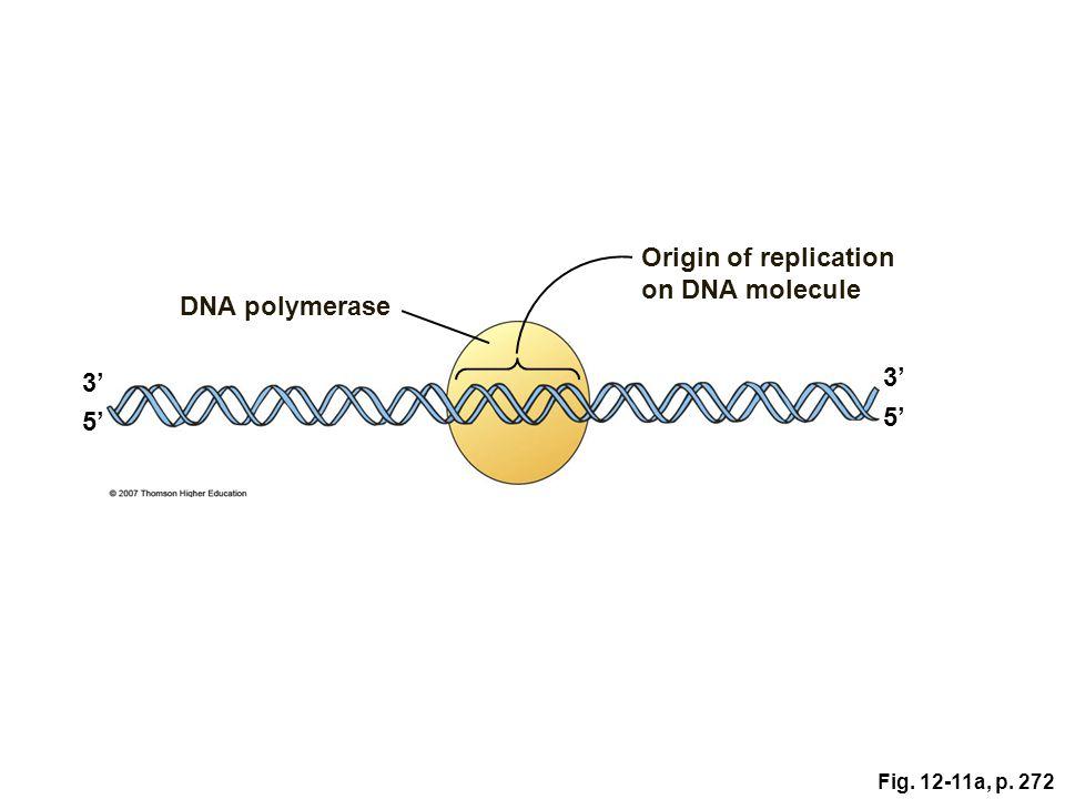 Origin of replication on DNA molecule