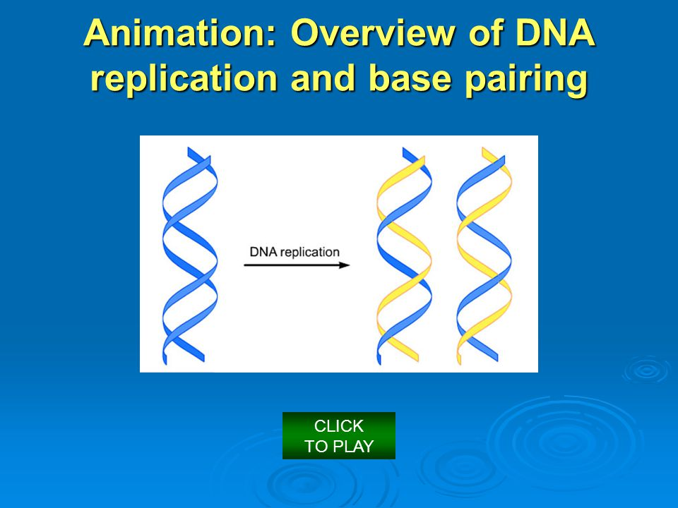 Animation: Overview of DNA replication and base pairing