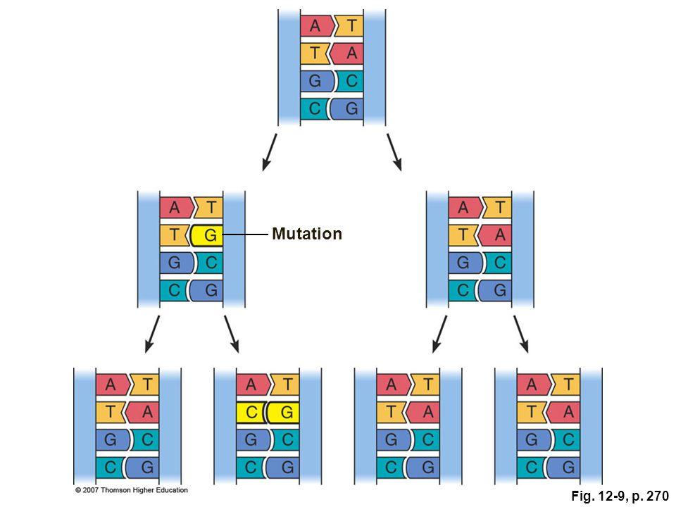 Mutation Figure 12.9: The perpetuation of a mutation.