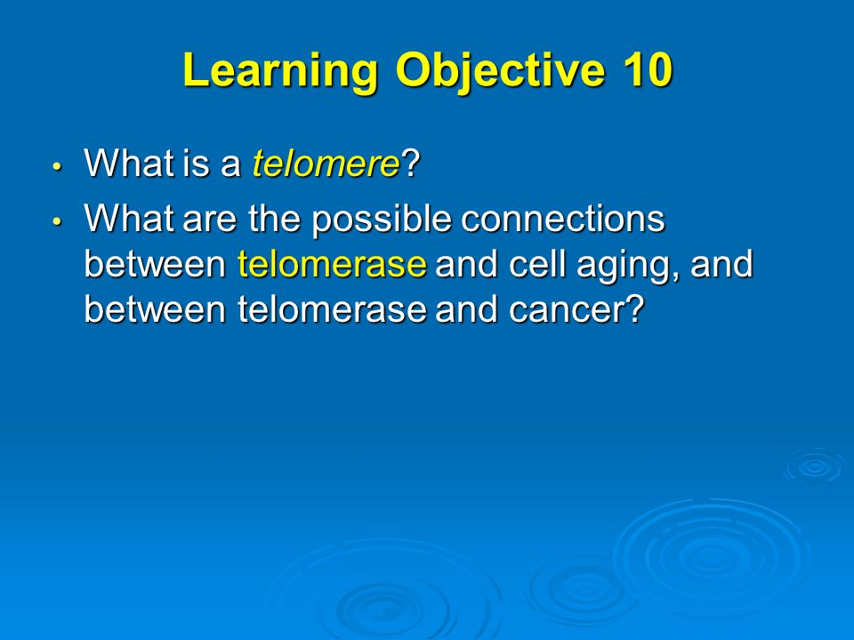 Learning Objective 10 What is a telomere