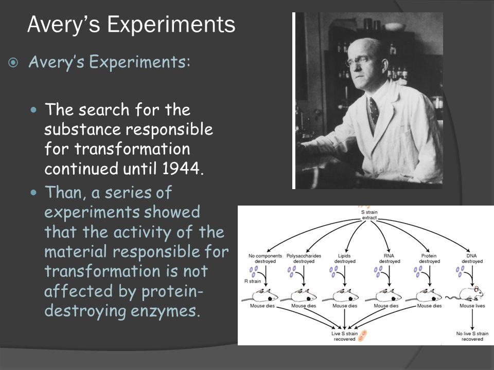 Avery's Experiments Avery's Experiments: