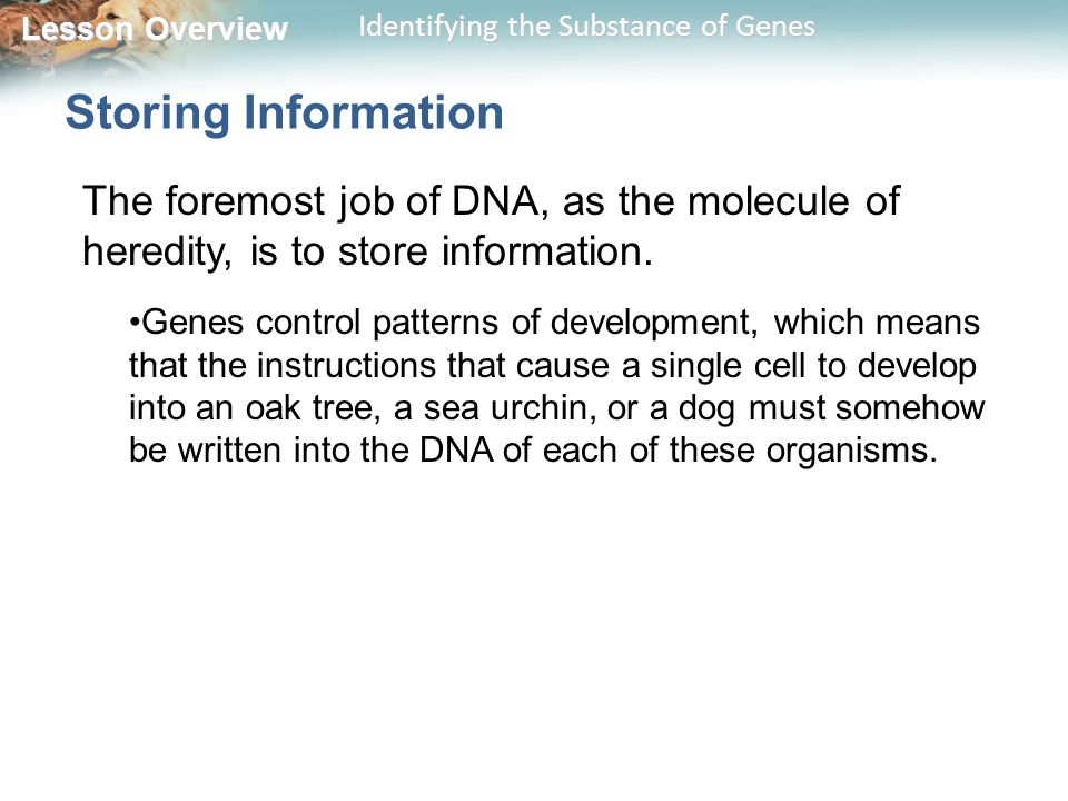 Storing Information The foremost job of DNA, as the molecule of heredity, is to store information.