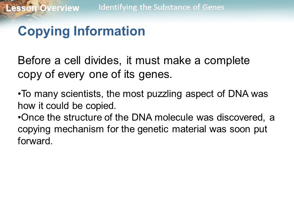 Copying Information Before a cell divides, it must make a complete copy of every one of its genes.