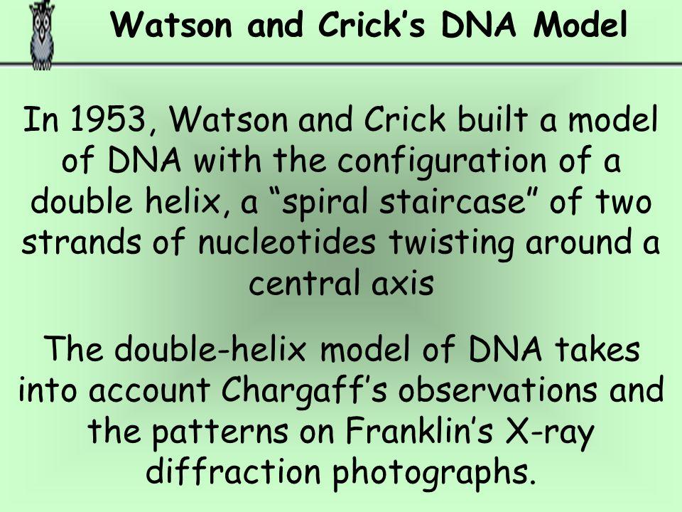 Watson and Crick's DNA Model