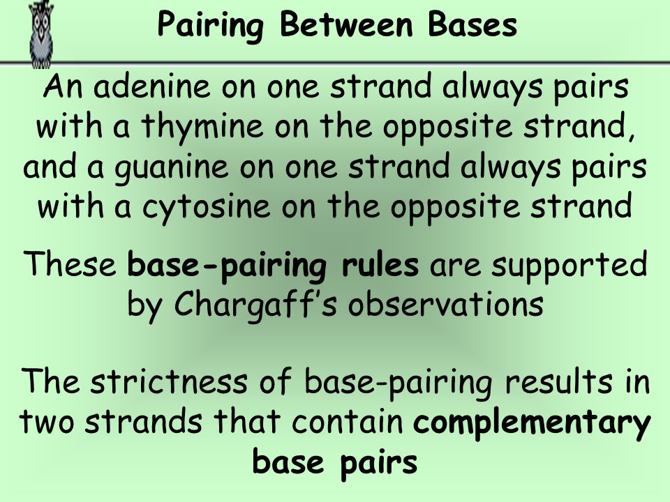 These base-pairing rules are supported by Chargaff's observations
