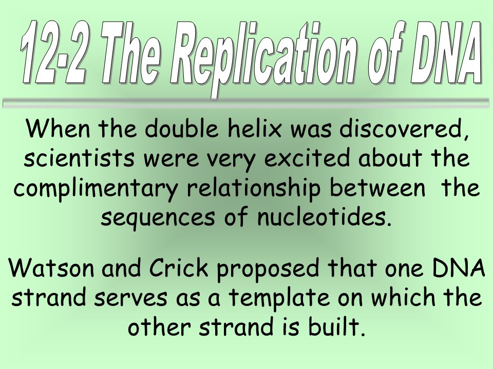 12-2 The Replication of DNA