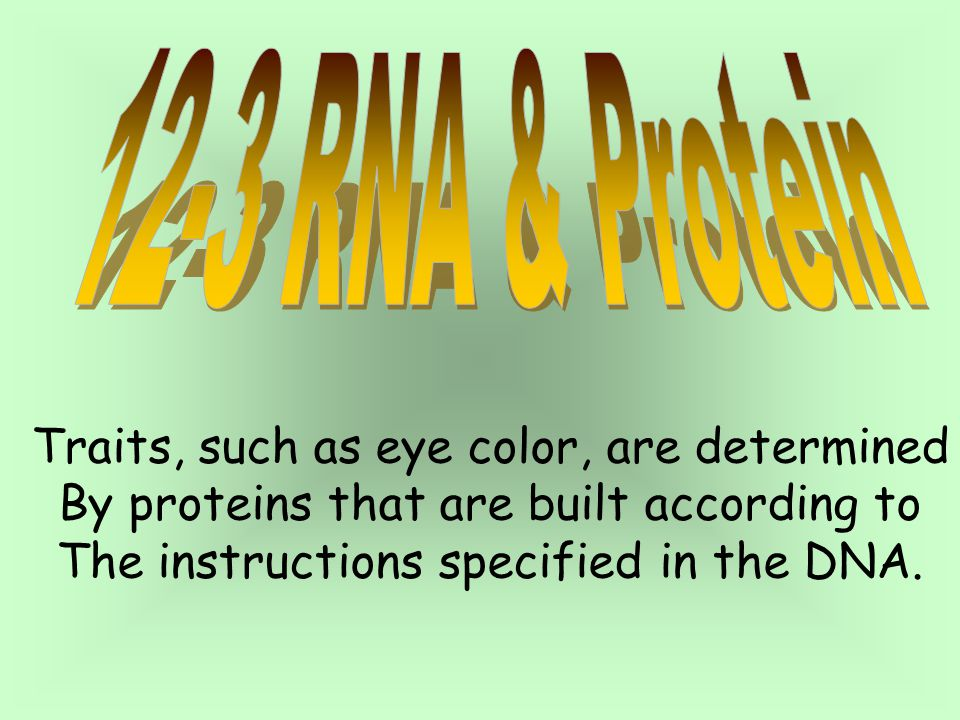 Traits, such as eye color, are determined