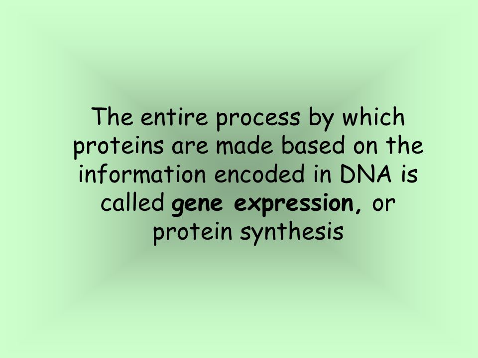 The entire process by which proteins are made based on the information encoded in DNA is called gene expression, or protein synthesis