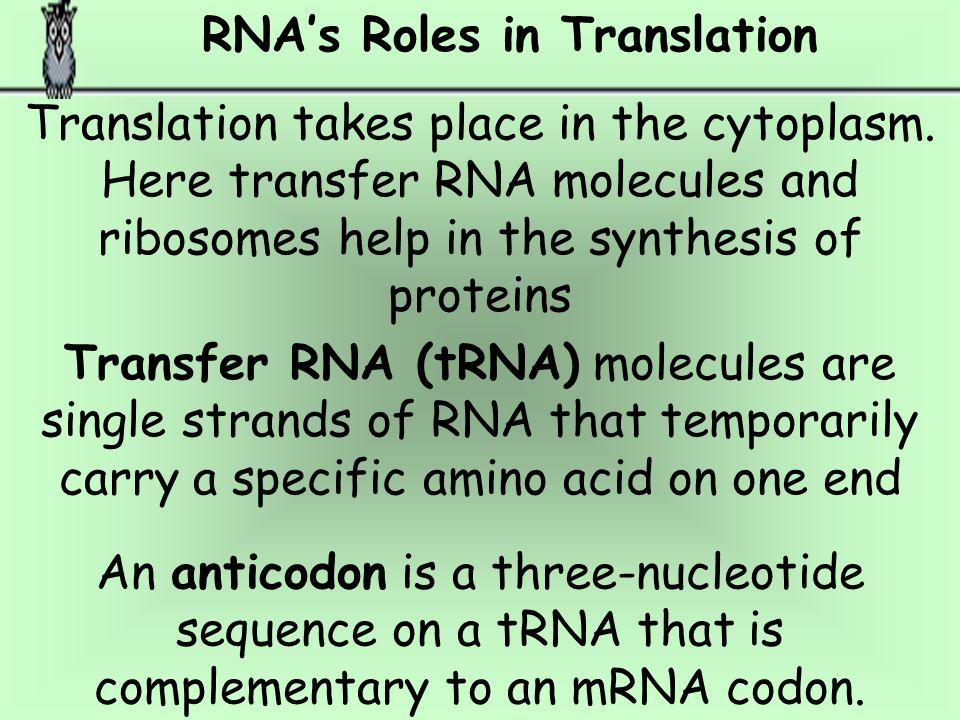 RNA's Roles in Translation