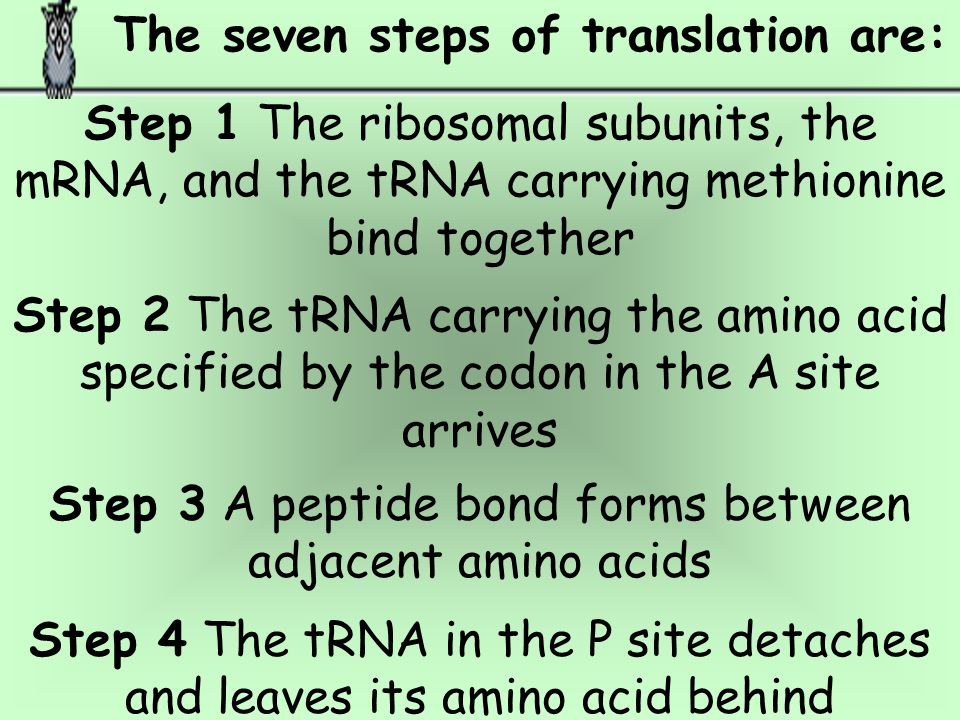 The seven steps of translation are: