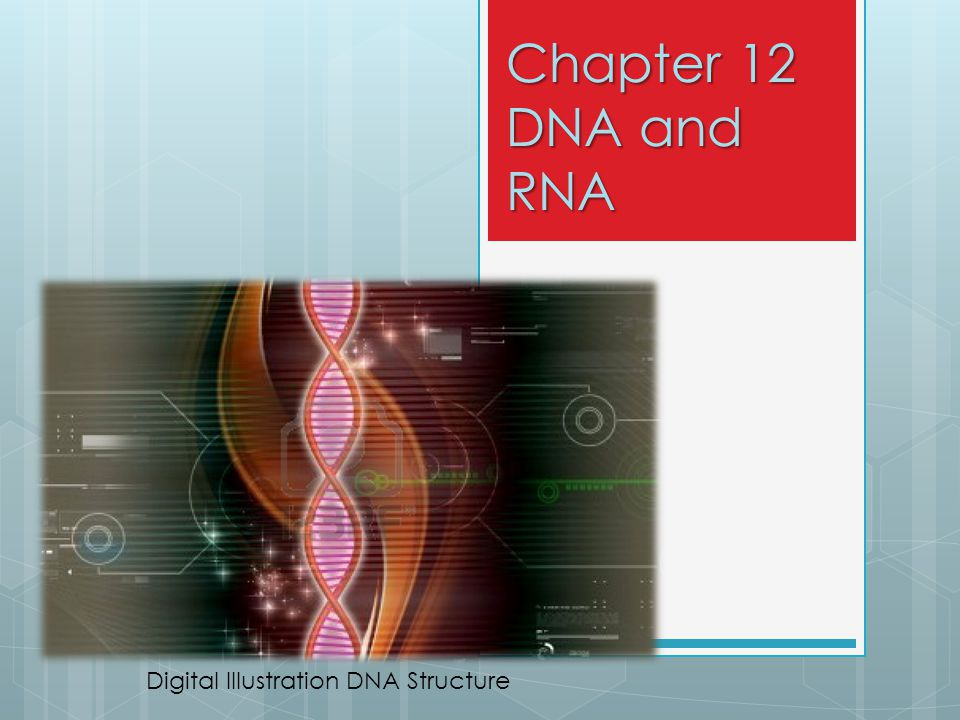 Chapter 12 DNA and RNA Digital Illustration DNA Structure