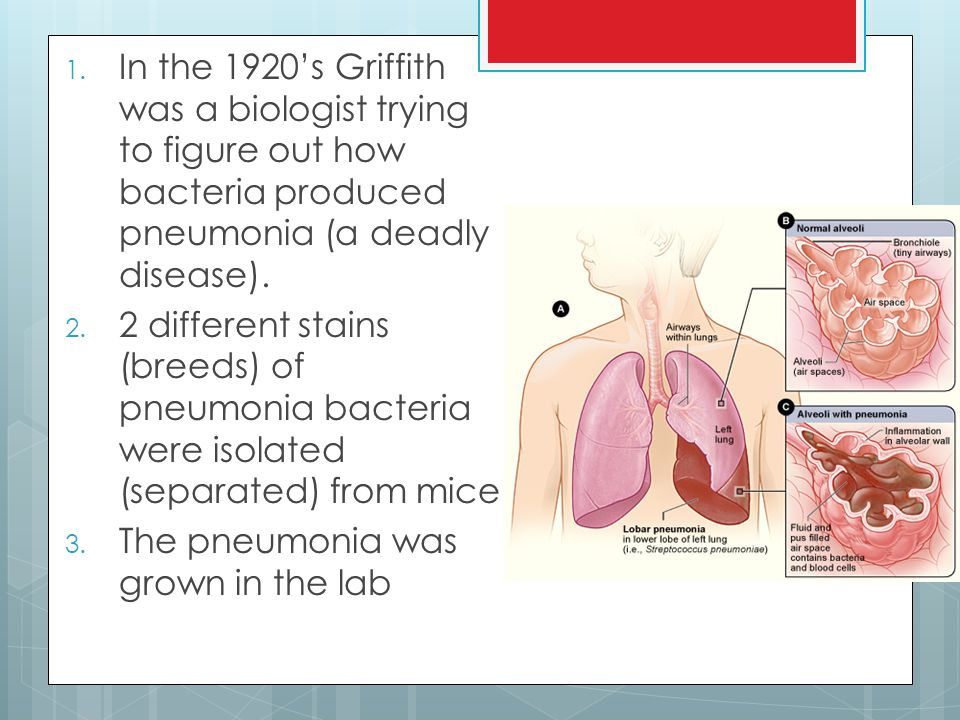 In the 1920's Griffith was a biologist trying to figure out how bacteria produced pneumonia (a deadly disease).