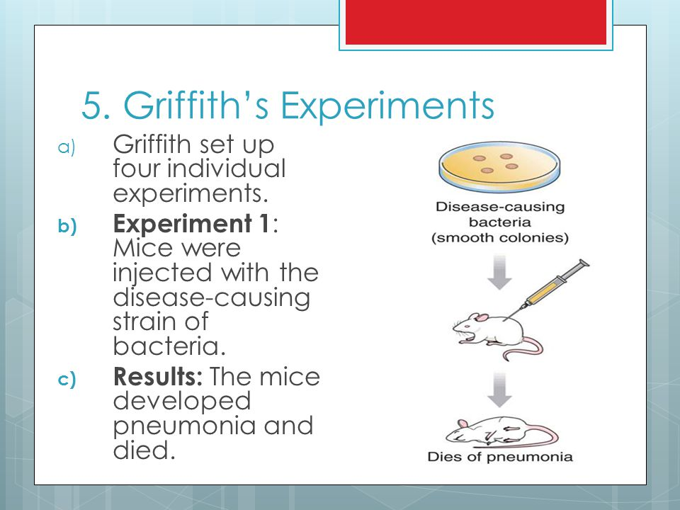 5. Griffith's Experiments