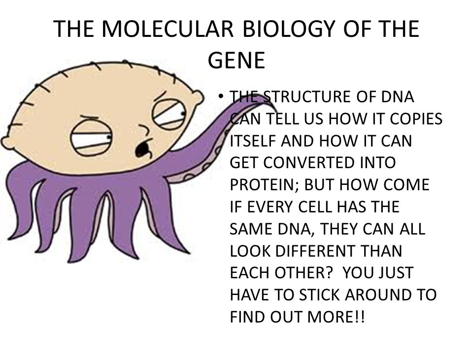 THE MOLECULAR BIOLOGY OF THE GENE