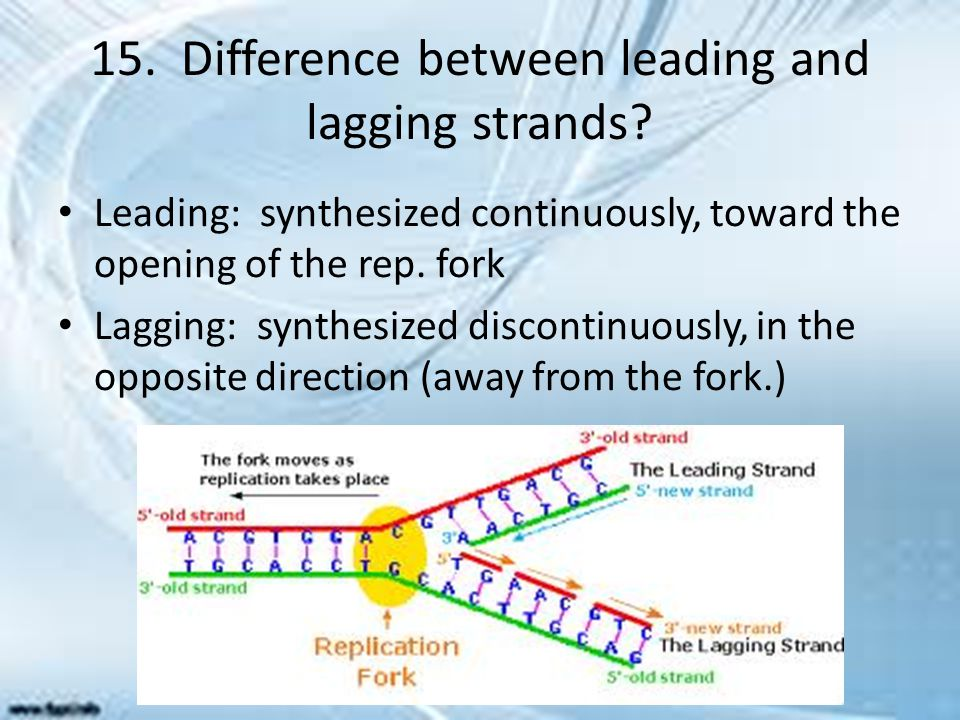 15. Difference between leading and lagging strands