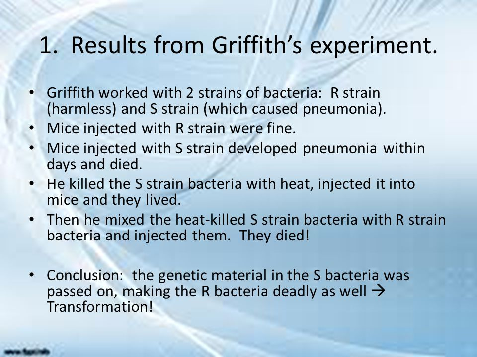 1. Results from Griffith's experiment.