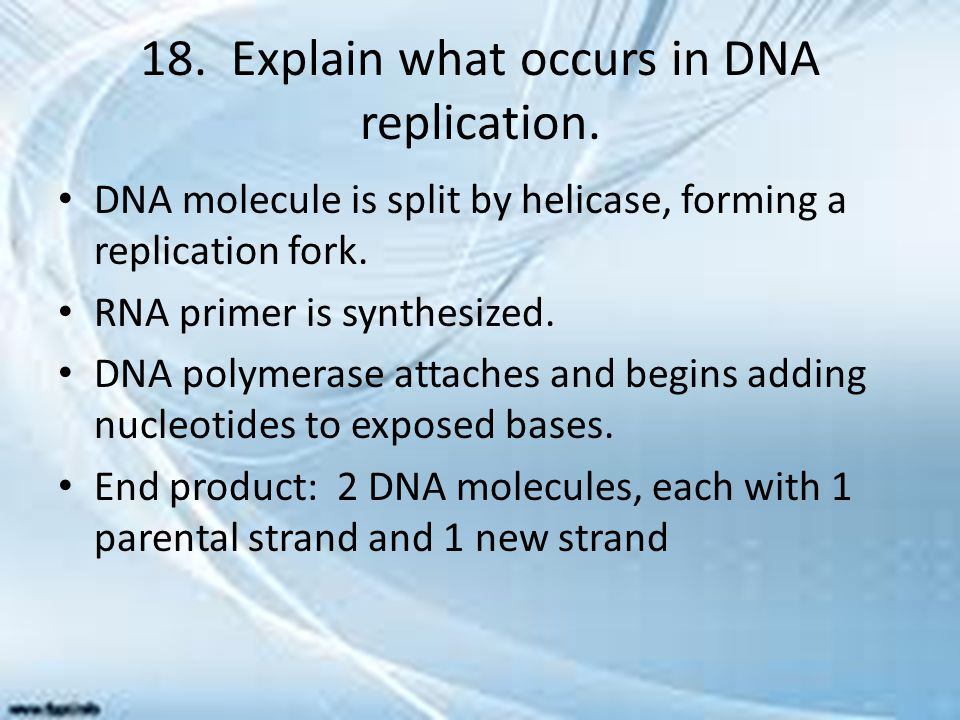 18. Explain what occurs in DNA replication.