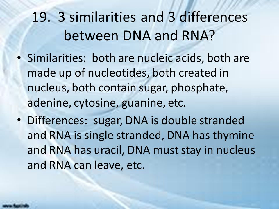 19. 3 similarities and 3 differences between DNA and RNA