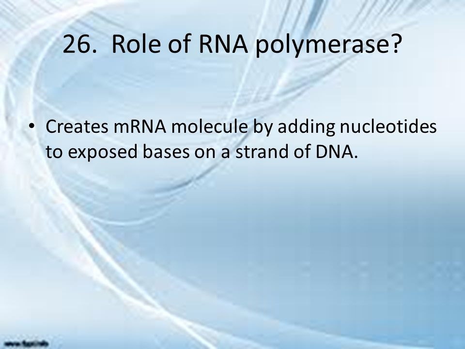26. Role of RNA polymerase.