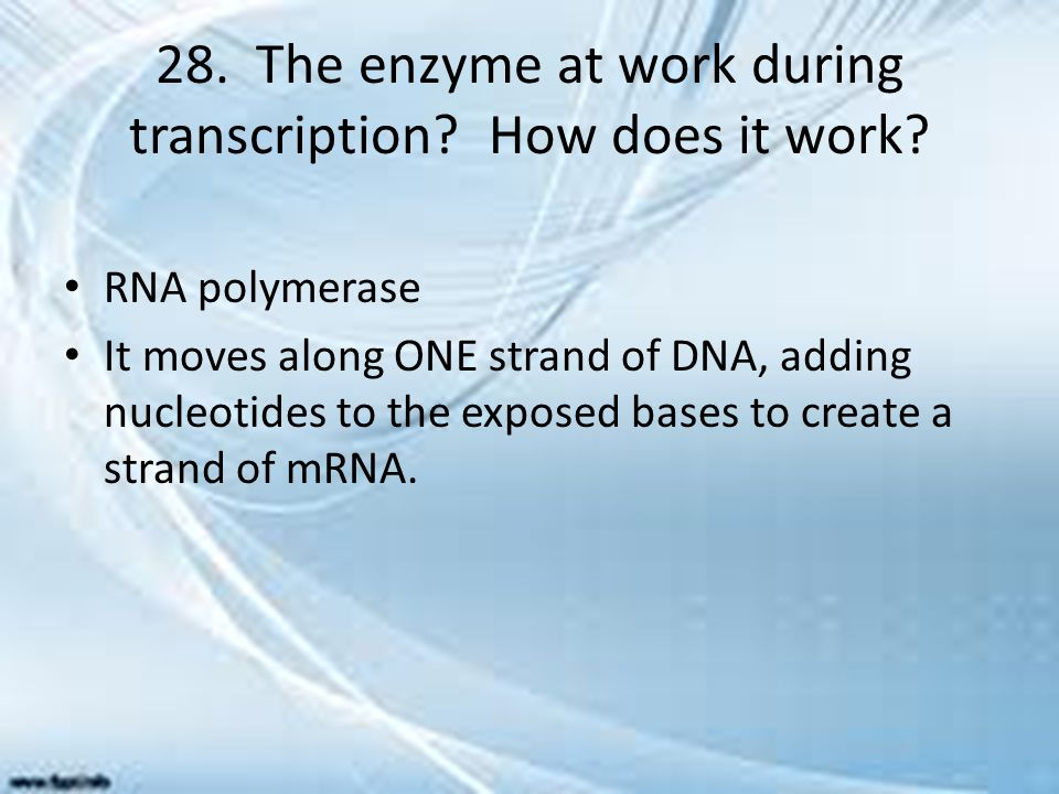 28. The enzyme at work during transcription How does it work
