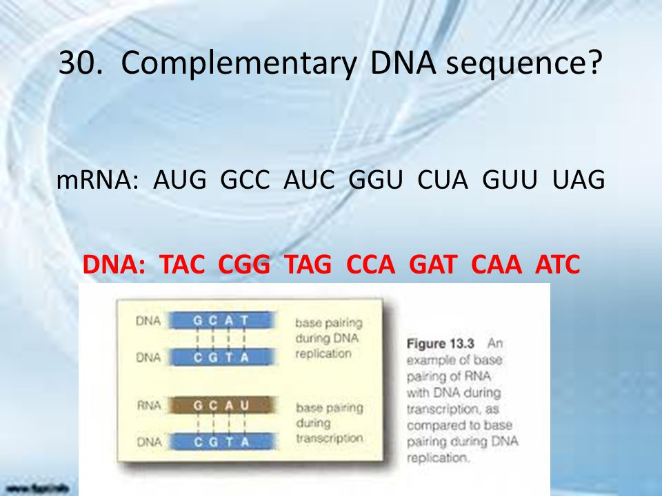 30. Complementary DNA sequence