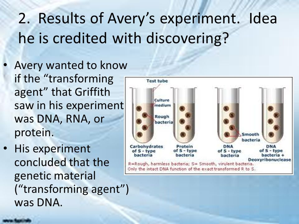 2. Results of Avery's experiment. Idea he is credited with discovering