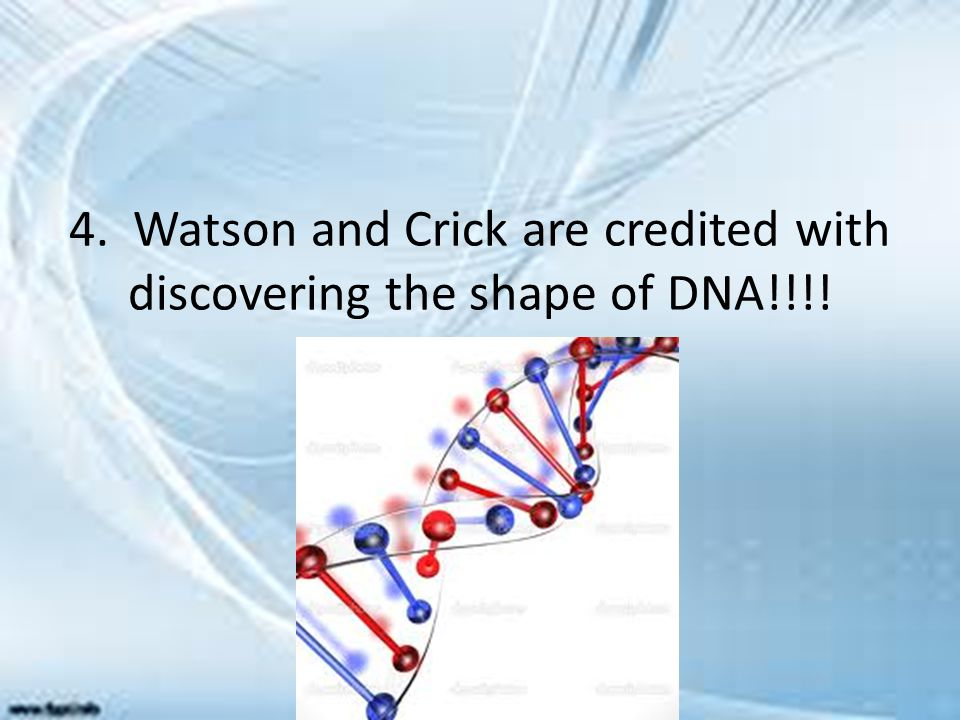 4. Watson and Crick are credited with discovering the shape of DNA!!!!