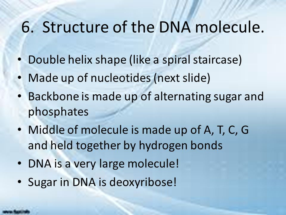 6. Structure of the DNA molecule.