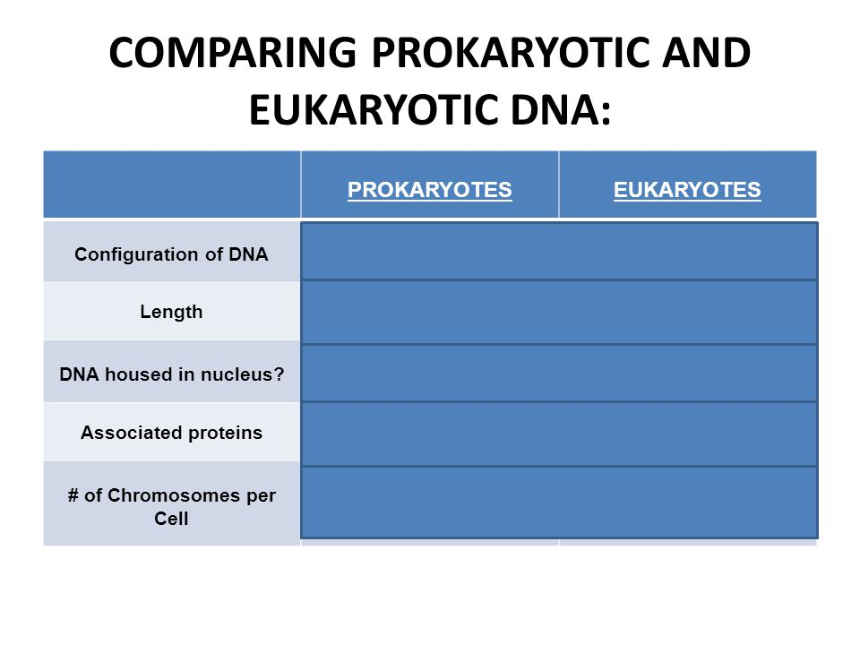 COMPARING PROKARYOTIC AND EUKARYOTIC DNA: