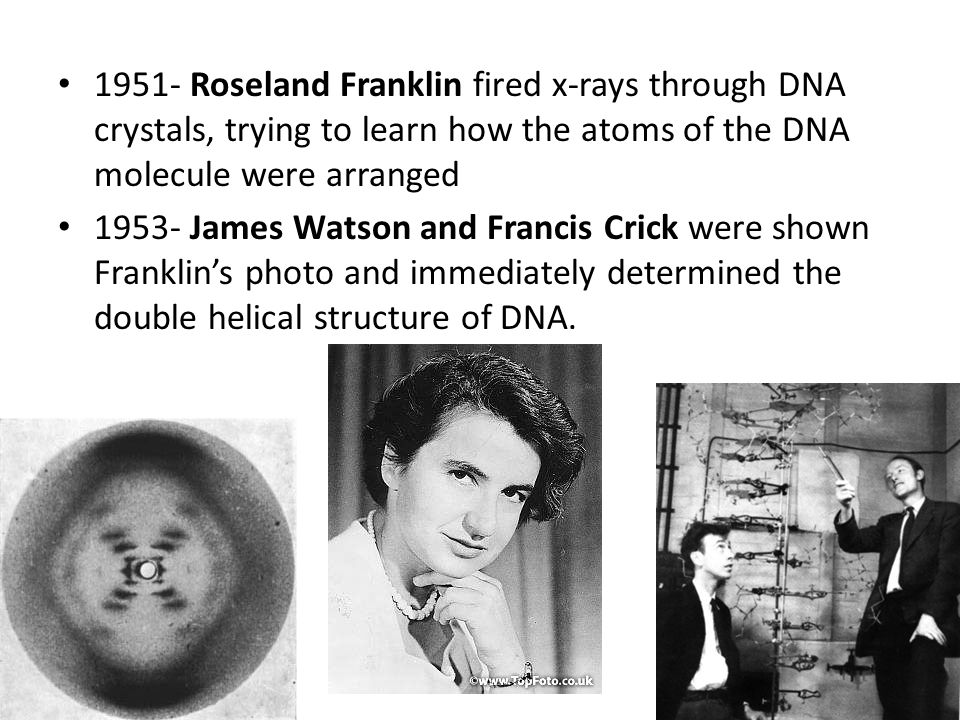 1951- Roseland Franklin fired x-rays through DNA crystals, trying to learn how the atoms of the DNA molecule were arranged