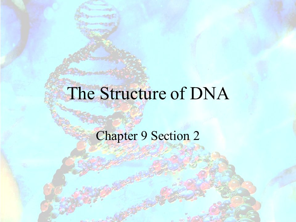 The Structure of DNA Chapter 9 Section 2