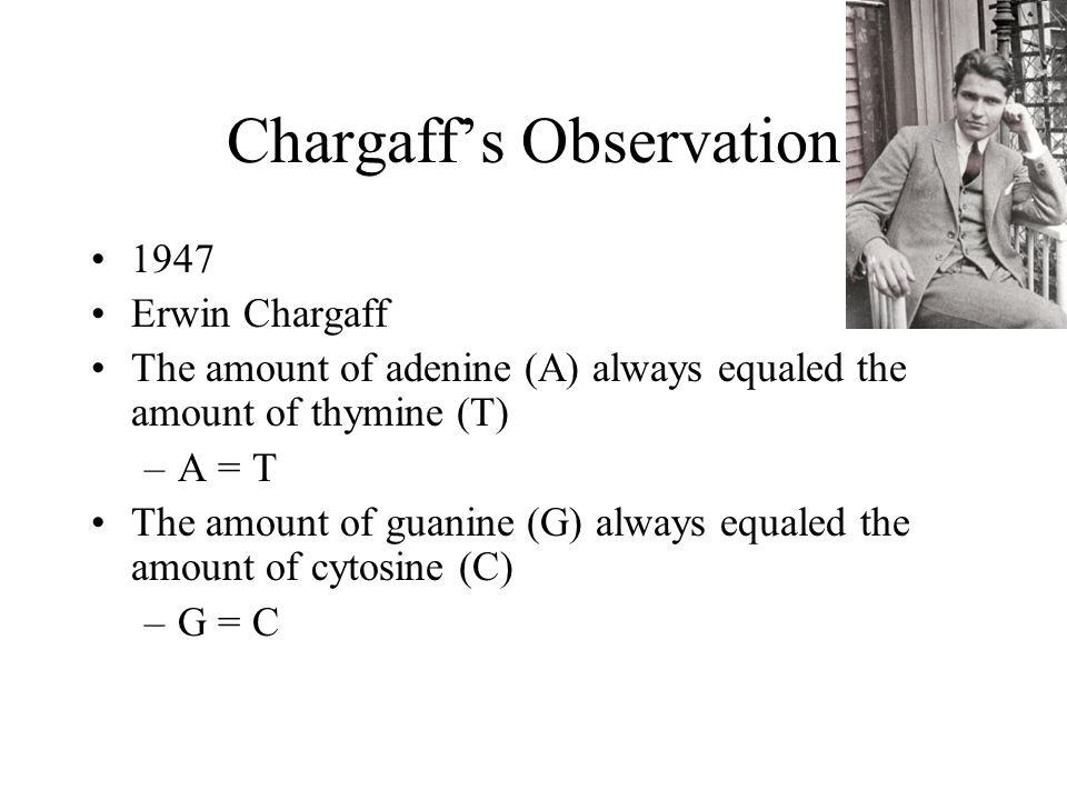 Chargaff's Observation