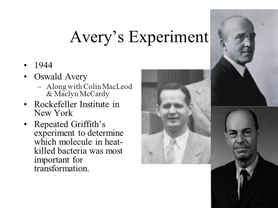 Avery's Experiment 1944 Oswald Avery Rockefeller Institute in New York