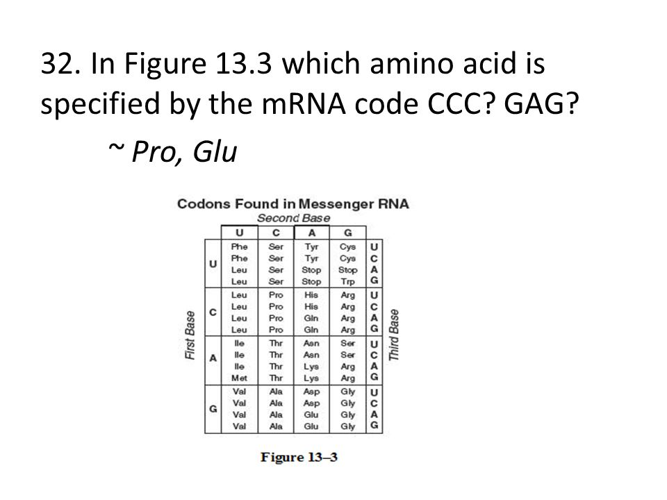 32. In Figure 13. 3 which amino acid is specified by the mRNA code CCC