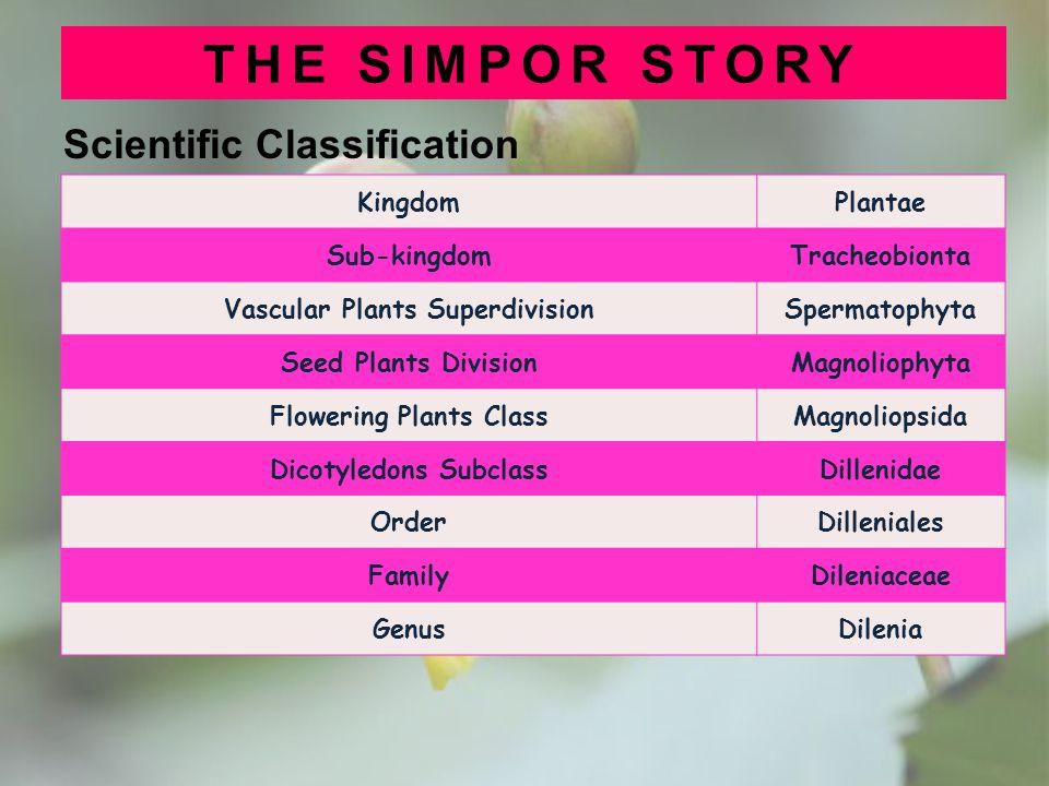 THE SIMPOR STORY Scientific Classification Kingdom Plantae Sub-kingdom