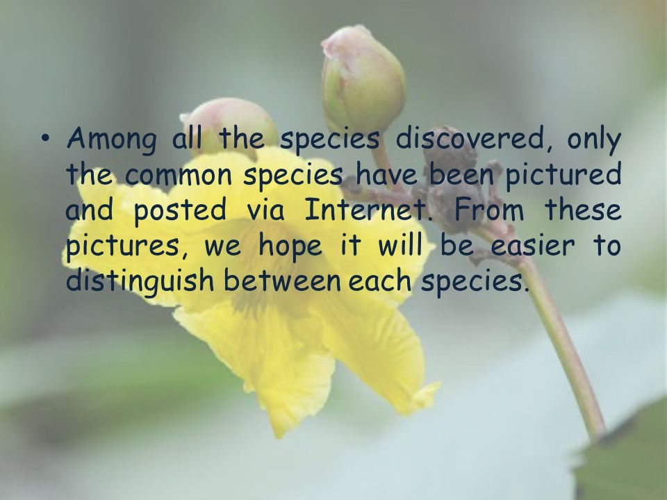 Among all the species discovered, only the common species have been pictured and posted via Internet.