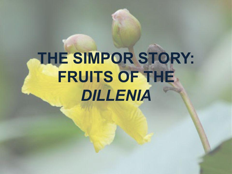 THE SIMPOR STORY: FRUITS OF THE DILLENIA