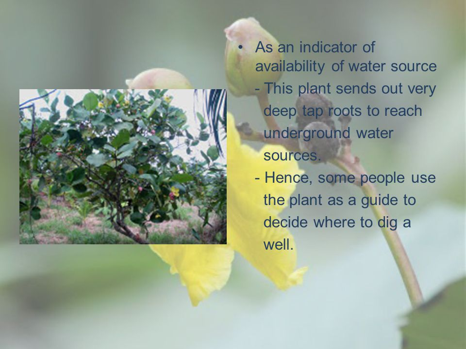 As an indicator of availability of water source