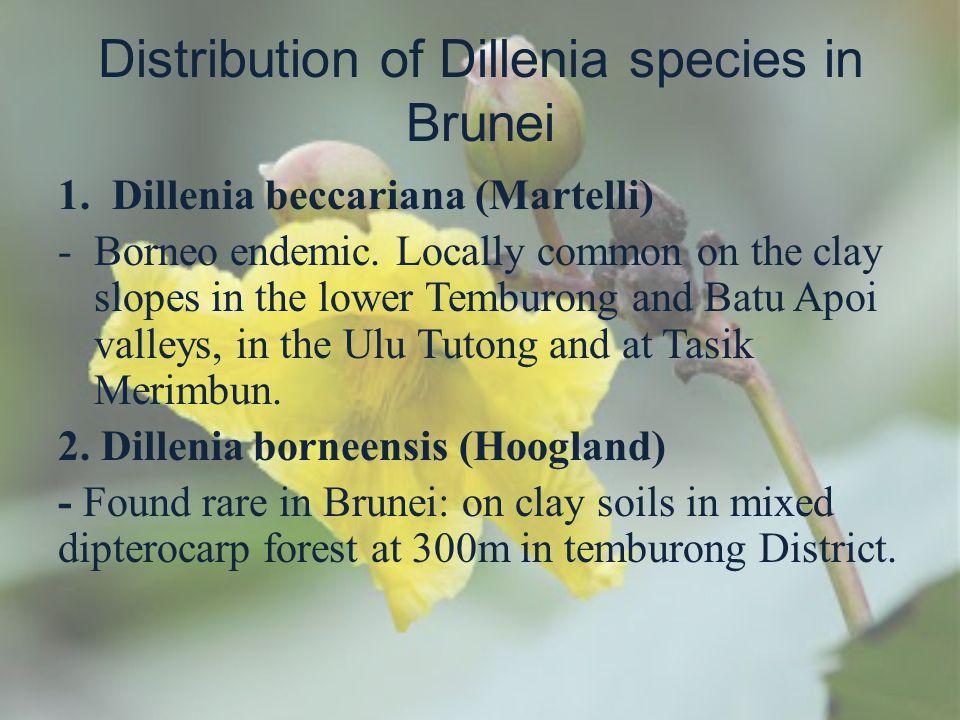 Distribution of Dillenia species in Brunei
