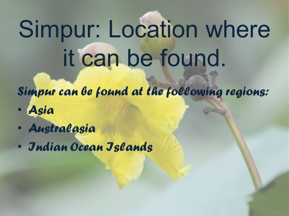 Simpur: Location where it can be found.