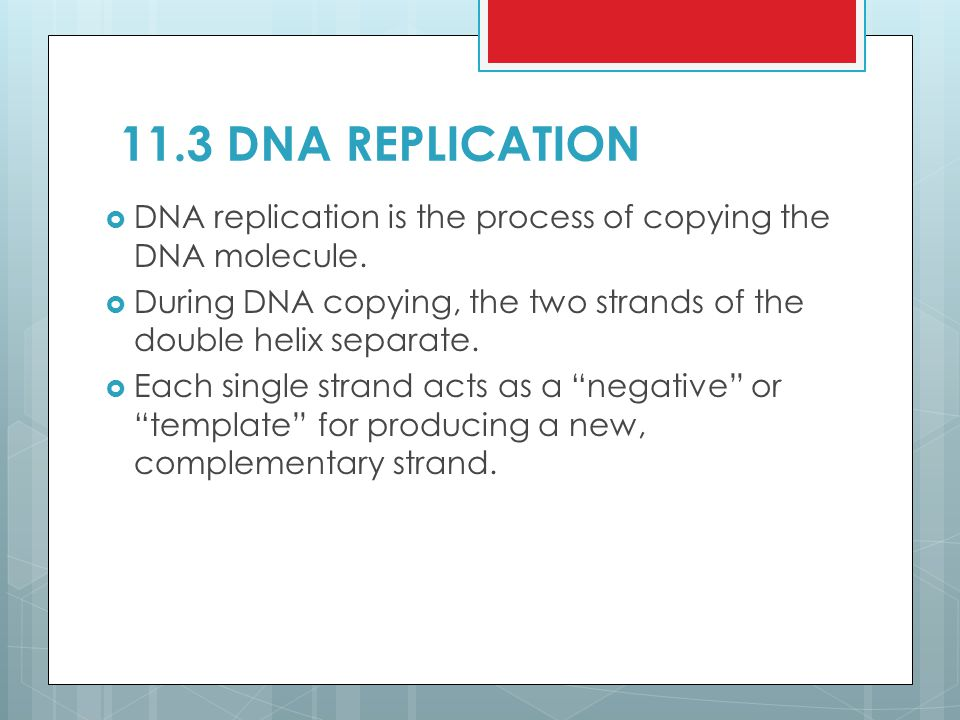 11.3 DNA REPLICATION DNA replication is the process of copying the DNA molecule. During DNA copying, the two strands of the double helix separate.