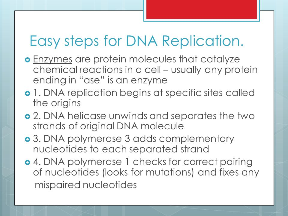 Easy steps for DNA Replication.