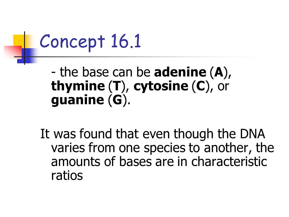 Concept 16.1 - the base can be adenine (A), thymine (T), cytosine (C), or guanine (G).