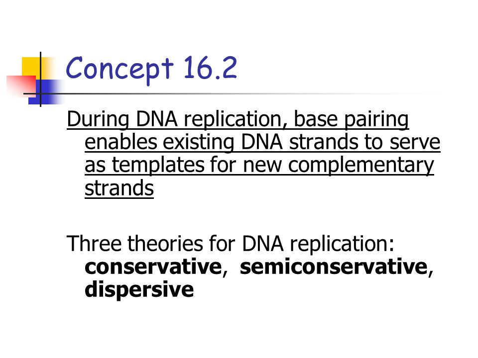 Concept 16.2 During DNA replication, base pairing enables existing DNA strands to serve as templates for new complementary strands.