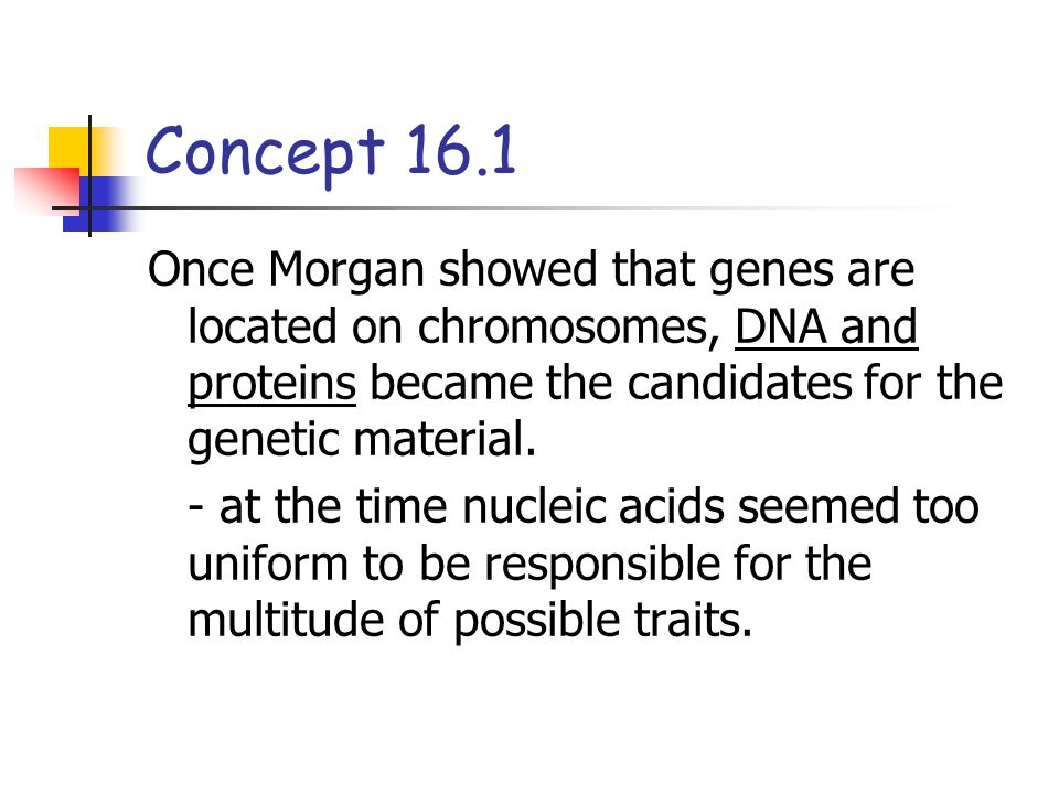 Concept 16.1 Once Morgan showed that genes are located on chromosomes, DNA and proteins became the candidates for the genetic material.