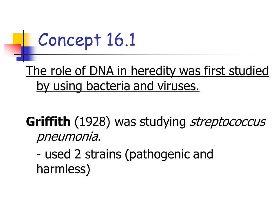 Concept 16.1 The role of DNA in heredity was first studied by using bacteria and viruses. Griffith (1928) was studying streptococcus pneumonia.