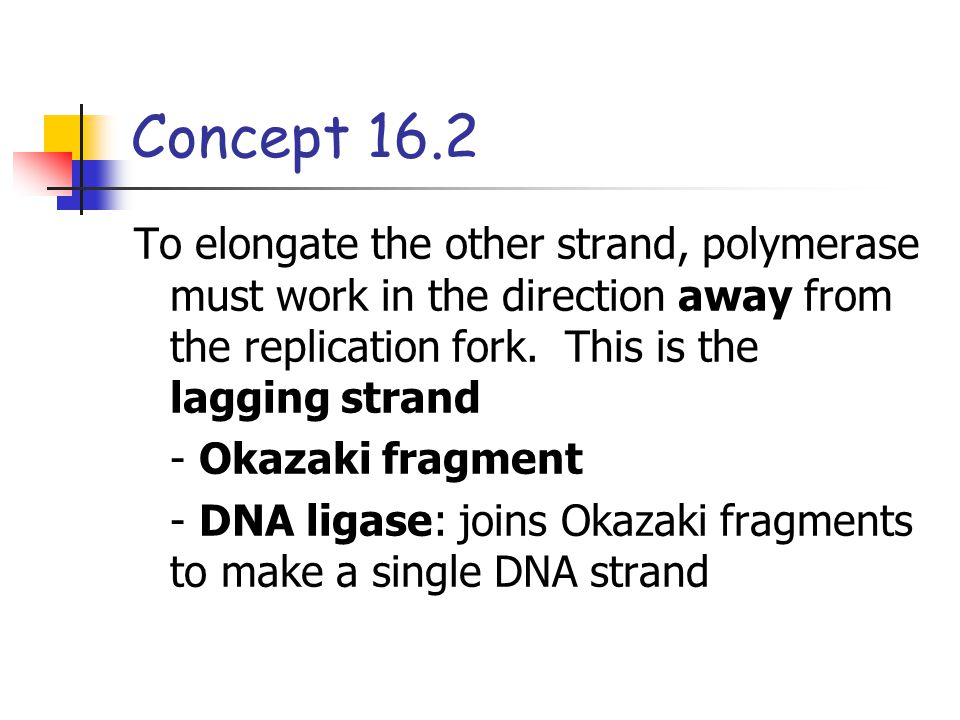 Concept 16.2 To elongate the other strand, polymerase must work in the direction away from the replication fork. This is the lagging strand.